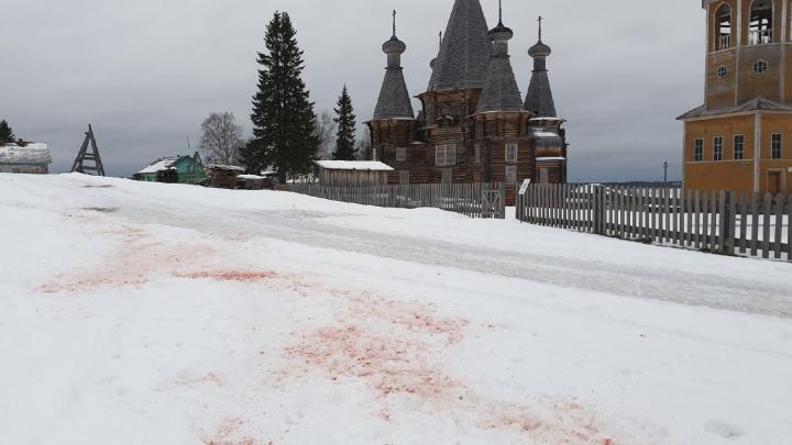 «Последний раз за фермой подала голос»: в Нёноксе волки снова напали на собак