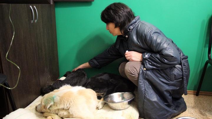В омском концлагере для собак продолжают гибнуть животные. Им срочно нужны лекарства и вольеры