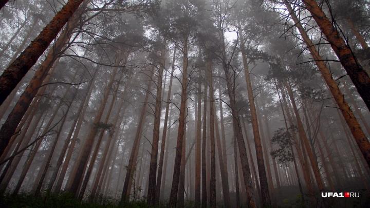 Пропавшие в ночи: в Башкирии спасли 14 туристов, которые заблудились в горах