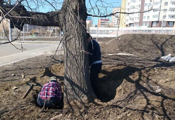 Старинный дуб на Волочаевской завалили мусором, землей. Во время стройки развязки его обещали спасти