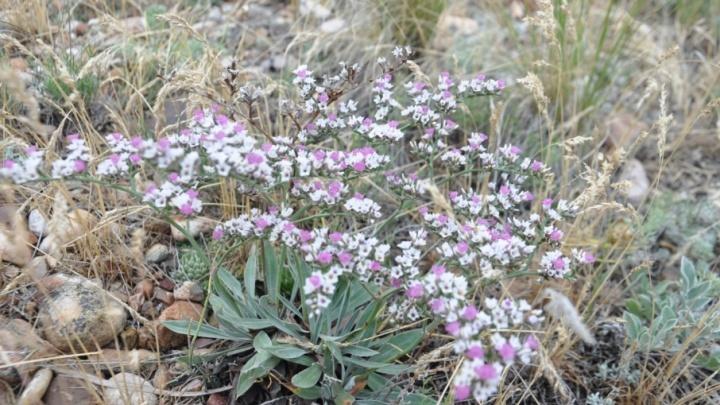 Учёные из Башкирии нашли новый вид растений