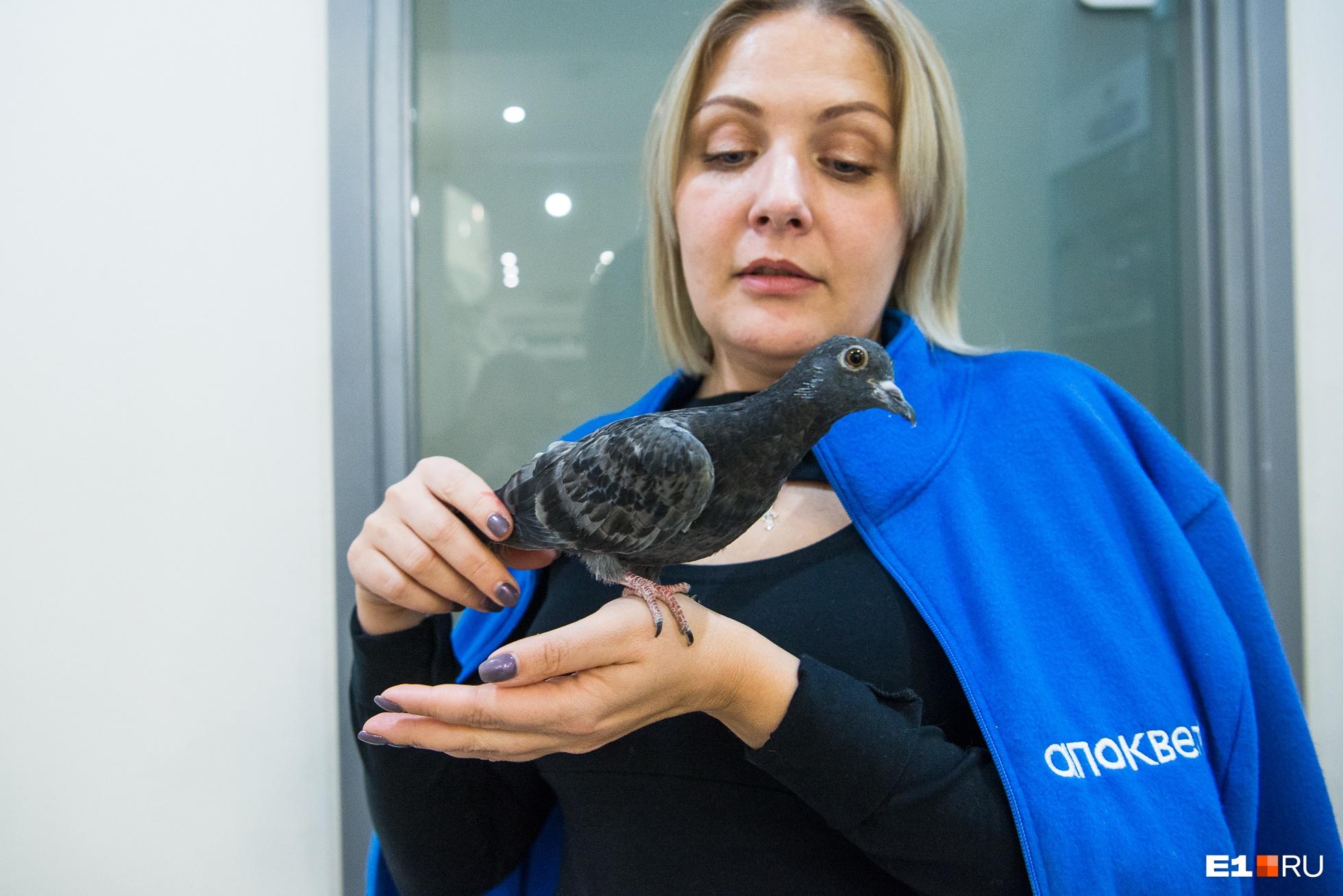 Елена с местным постояльцем голубем Гришей, его птенцом подбросили в клинику