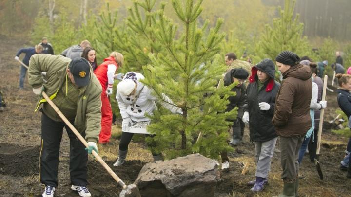 «Бессмысленно высаживать лиственницу»: директор ботанического сада СФУ об озеленении Красноярска