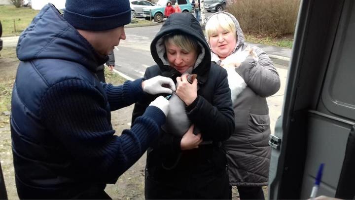 По Ярославлю бегала заражённая бешенством крыса: где её видели