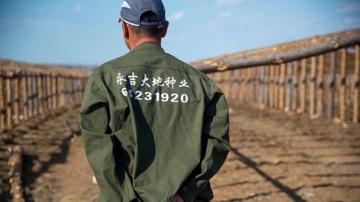 В парниковых условиях: полиция Волгограда нагрянула в китайские теплицы со смертельными помидорами