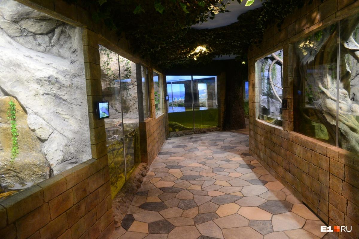 В экспозиции «Водные рептилии» 15 террариумов и вольеров