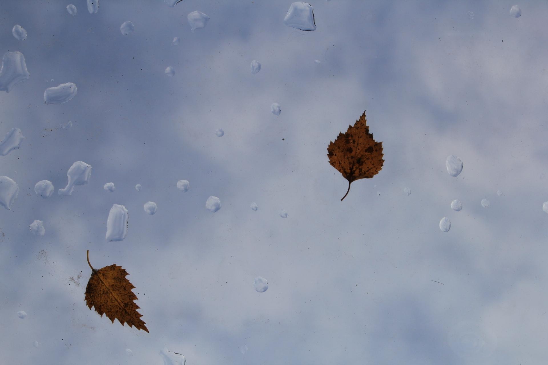 Осенняя погода потихоньку подступает к Поморью