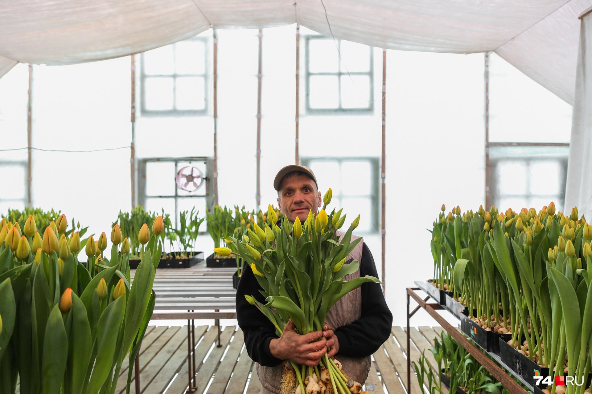 Без мужской силы в теплице не обойтись, одна корзина с тюльпанами весит около пяти килограммов