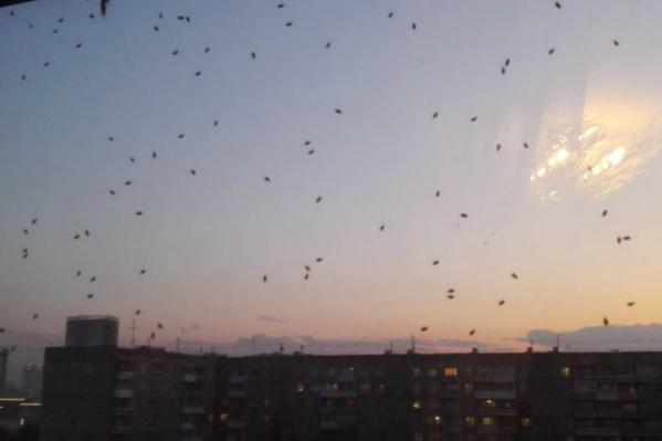 Жители заметили насекомых сегодня после дождя