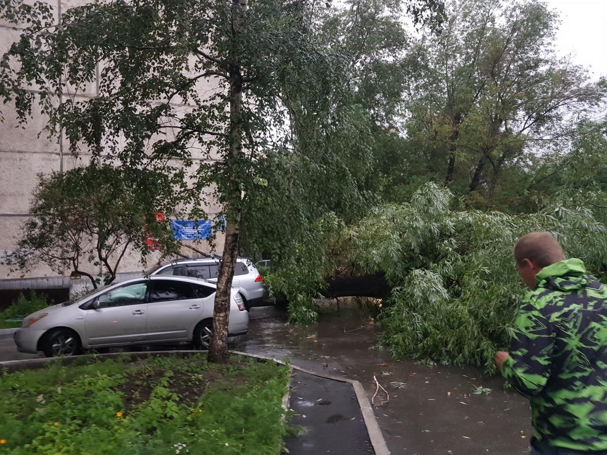Сегодня ветер и дождь валили деревья в Челябинске