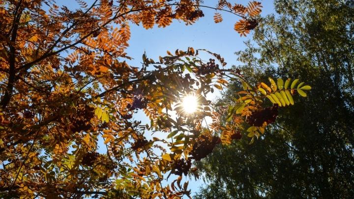 К зиме озеленят: до конца года в Екатеринбурге высадят полторы тысячи деревьев
