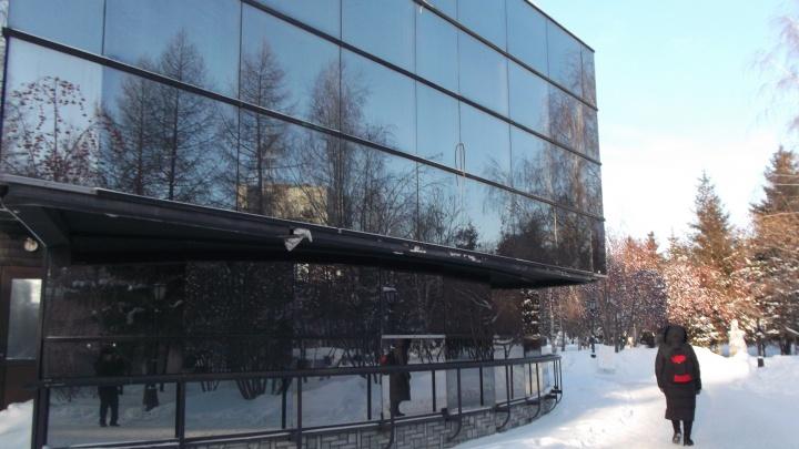 Суматошные свиристели разбились о стёкла в Первомайском сквере