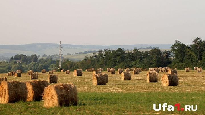 В Башкирии собрали рекордный урожай зерна