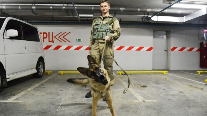 Крайза, ищи!: в Новосибирске охрана берет на работу собак