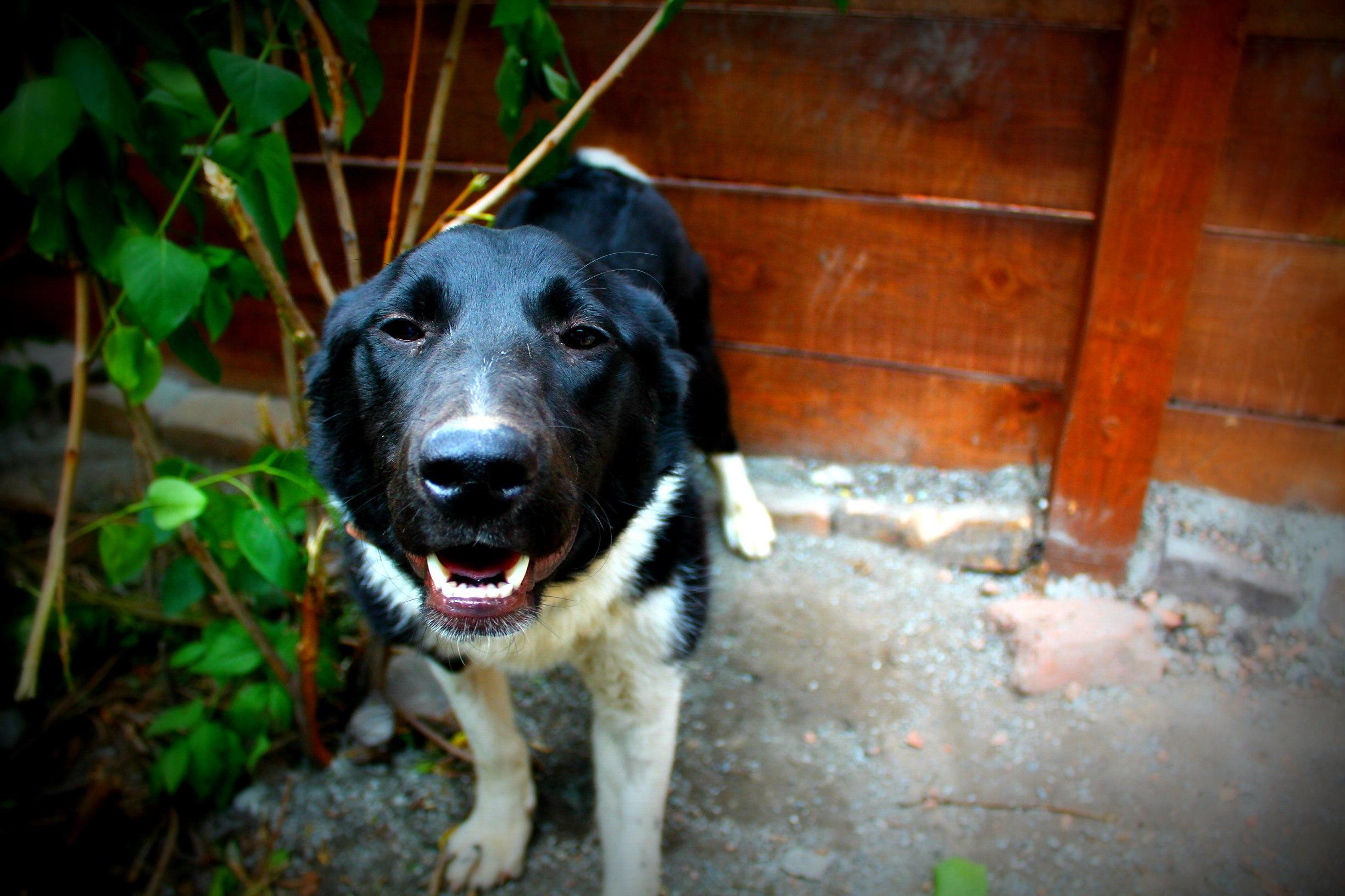 Сейчас Дези не узнать — это здоровая, ласковая и жизнерадостная собака<br>