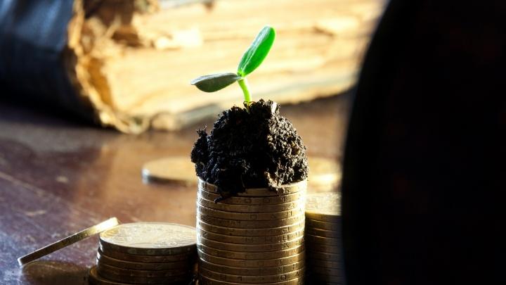 Деньги в землю: как купить участок без риска