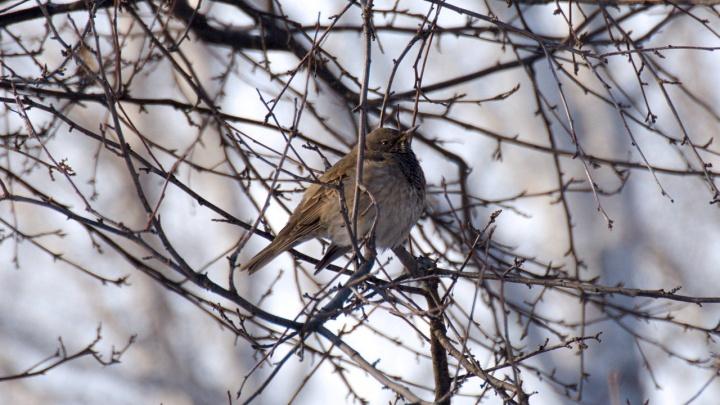 Фото: в дендропарке заметили редкую для Новосибирска маленькую птицу