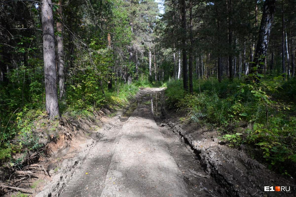 Дорога в лесу довольно свежая — скорее всего, тут недавно прошла строительная техника, судя по торчащим и оборванным корням деревьев