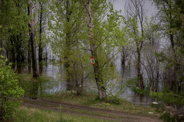 Уровень воды в Оби вырос до 359 см
