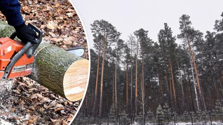 «Рубить — просто преступление»: екатеринбуржцы встали на защиту леса, который отдадут под застройку