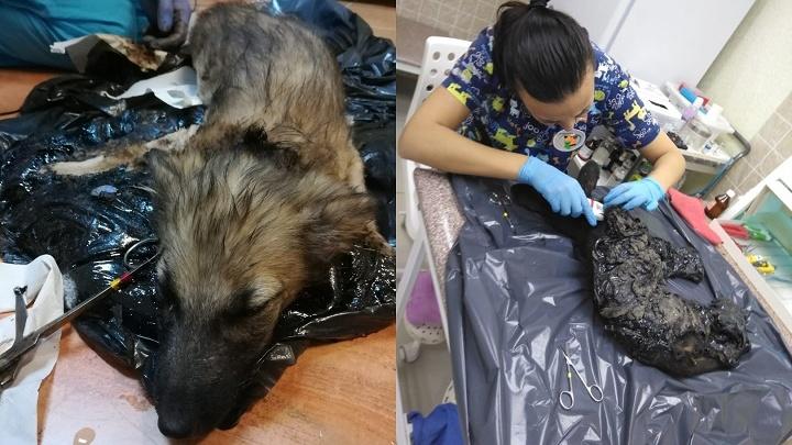 «Сутки керосином отмывали»: ветеринары спасли щенков, которые завязли в гудроне