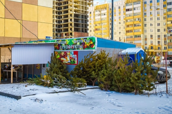 Штраф за ёлочные свалки — до 10 тысяч рублей