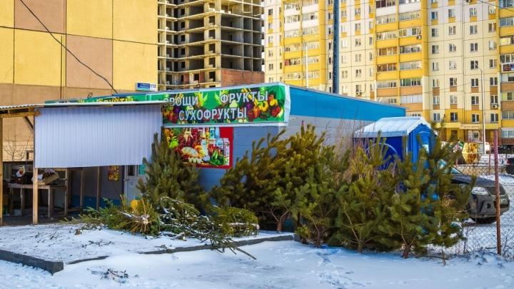 «Отделяют зелёное от незелёного»: в Челябинске завершают ликвидацию ёлочных свалок