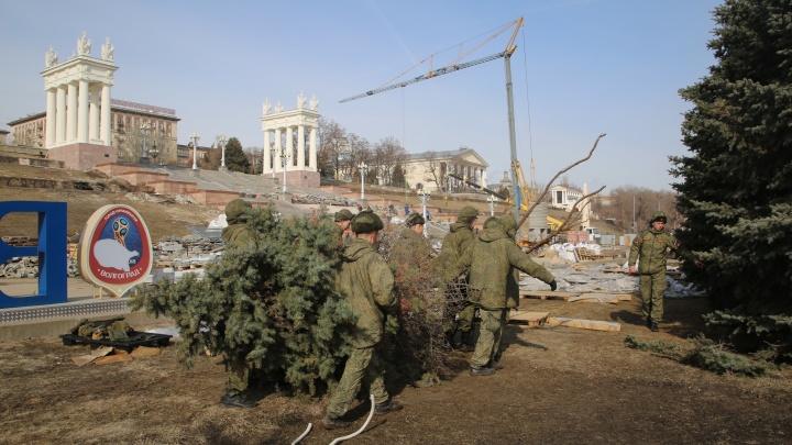 «Везём в часть»: на Центральной набережной Волгограда 15 солдат выкорчёвывают исторические ели