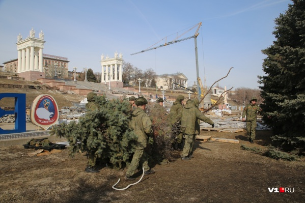Деревья солдаты отвезут в часть, но сколько нужно пересадить, им не сказали