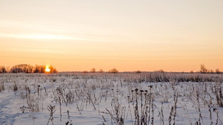 На руках вынесли с поля: в Ярославле полицейские спасли заблудившуюся бабушку