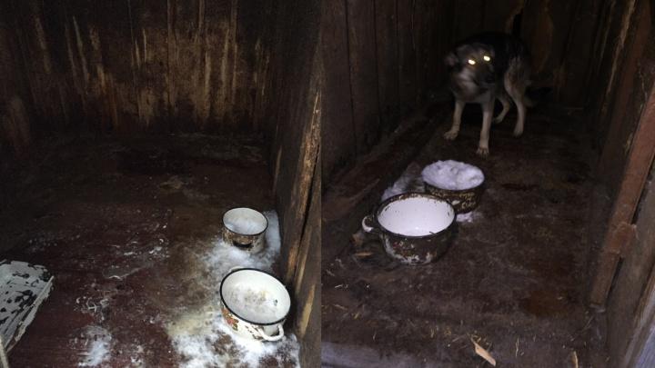 «С какой живодерни вы их привезли?» В поселке Каменный овраг в приюте погибают животные