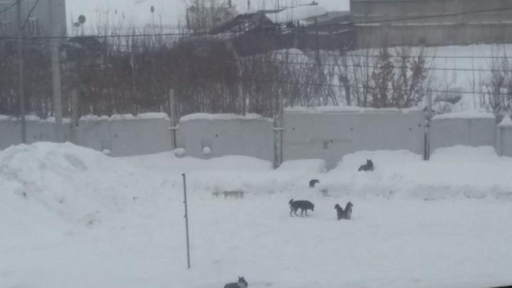 Городские службы переловили страшных собак возле новостроек у Димитровского моста