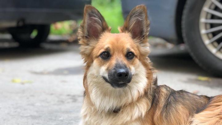 Бедный Жорик: зоозащитница забрала у пенсионерки любимого пса