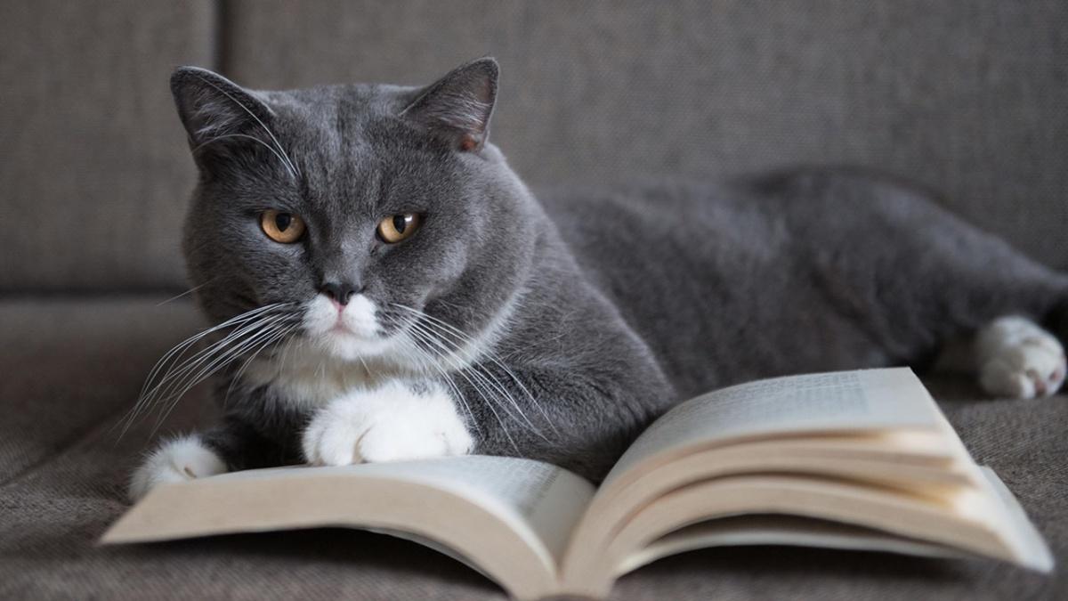 Каждый месяц вместе с «Читай-городом» будем рассказывать челябинцам об интересных и полезных книгах