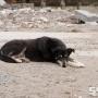 Жительница Лысьвы отсудила у администрации компенсацию за укус бездомной собаки