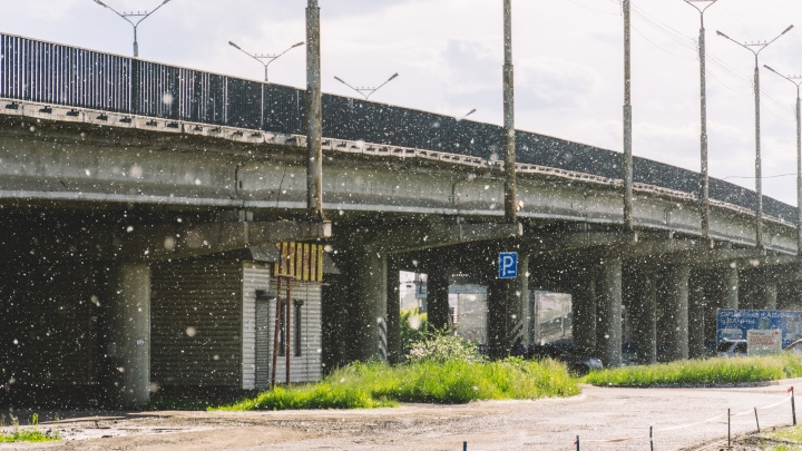 Раздражающий, но такой красивый: фотоподборка Омска, занесённого тополиным пухом