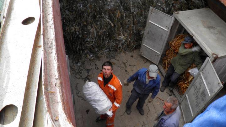 Архангельский водорослевый комбинат оштрафовали за вылов редких водорослей в Белом море