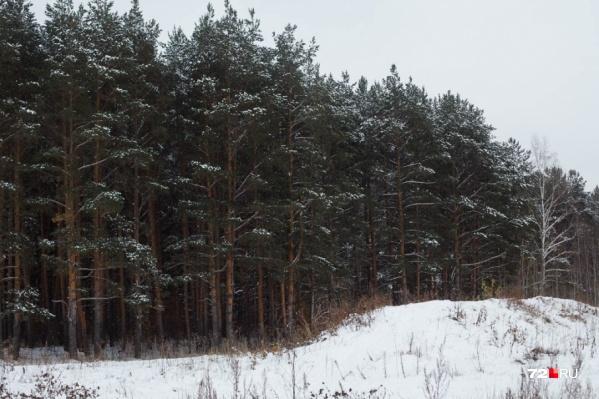 Люди обсуждают, что волки бегут в сторону тюменских деревень, граничащих с Казахстаном
