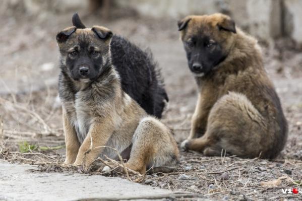 Собаки, по словам горожан, бросаются на прохожих с пакетами
