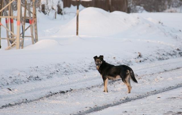 В Уфе будут отлавливать бездомных собак