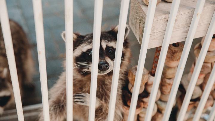 Новый закон о защите животных. Пропадут ли из тюменских ТЦ контактные зоопарки?