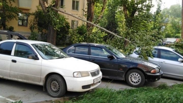 В Екатеринбурге штормовой ветер повалил деревья на машины и провода