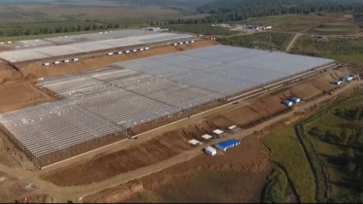 Должны по самые помидоры: строителей, возводивших новые теплицы «Чурилово», оставили без зарплаты