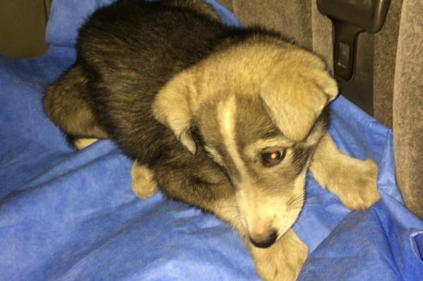По словам спасителей, пёс очень дрожал и боялся людей
