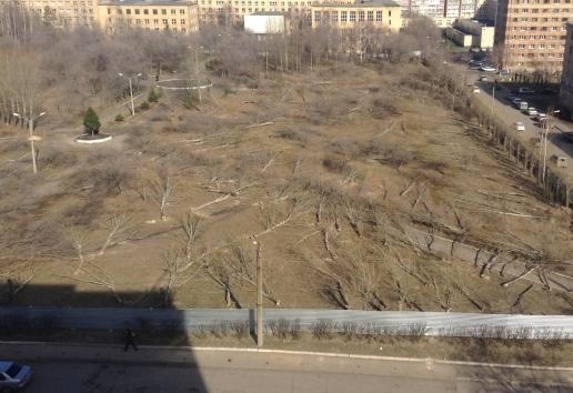 «Денег нет»: посадка деревьев взамен вырубленных ради Универсиады оказалась под угрозой