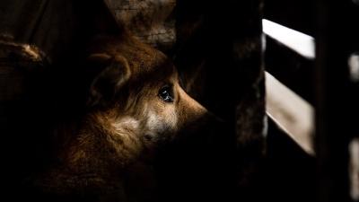 Запрет на убийство бездомных собак попросили отсрочить. Что не так с новым законом?