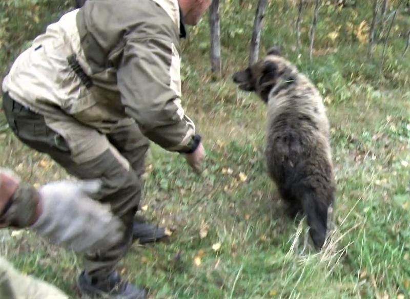 Ловля медвежонка вПрокопьевске угодила навидео