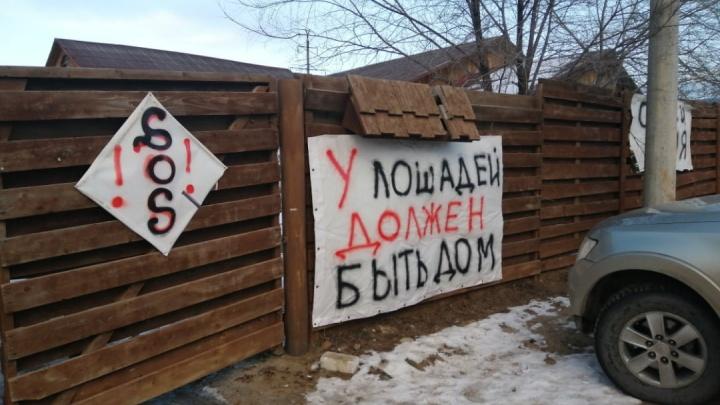 «Если это строили бандиты, то пусть бандитов будет больше»: в Волгограде сносят конюшни «Соснового бора»