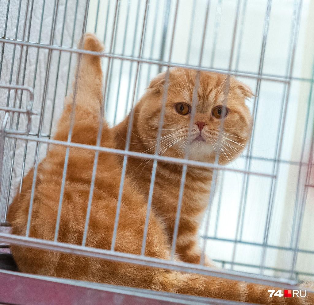 Разведение котиков — выгодный бизнес для тех, кто задумался о покупке квартиры