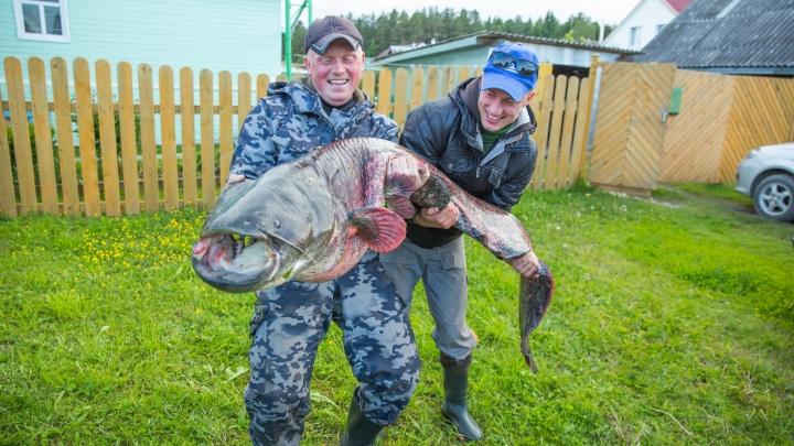 Ярославские рыбаки выловили двухметрового сома: 6 фото гигантской рыбы